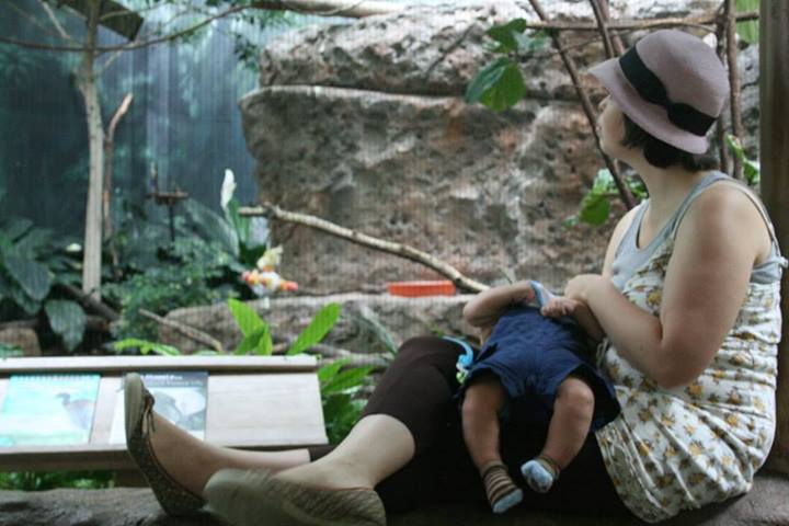 Savvy breastfeeding August at the zoo.